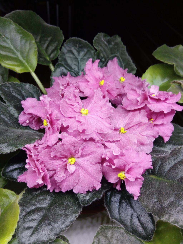Моё цветочное богатство - Страница 36 Img_2052