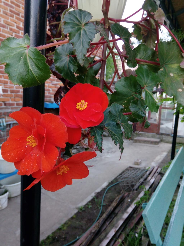 Моё цветочное богатство - Страница 37 Img_2064
