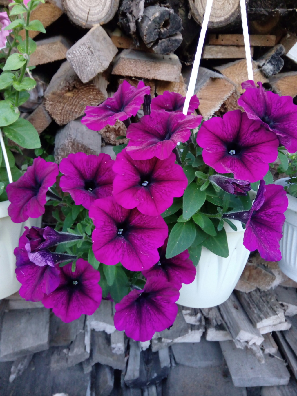 Моё цветочное богатство - Страница 37 Img_2076