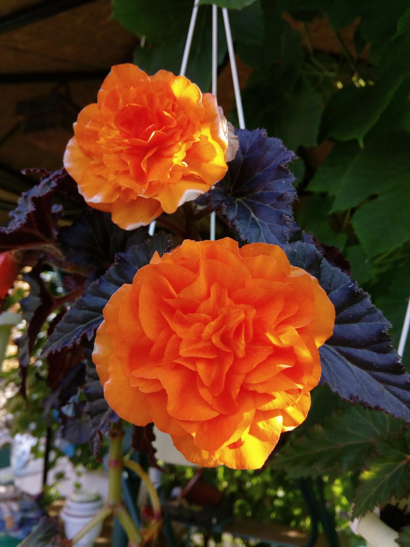 Моё цветочное богатство - Страница 37 Img_2078