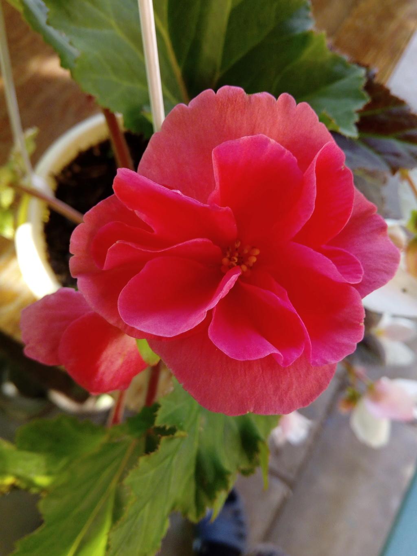 Моё цветочное богатство - Страница 37 Img_2081