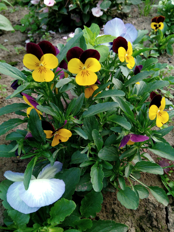 Моё цветочное богатство - Страница 37 Img_2082