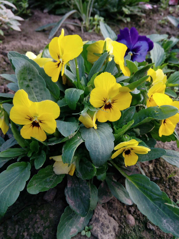 Моё цветочное богатство - Страница 37 Img_2083