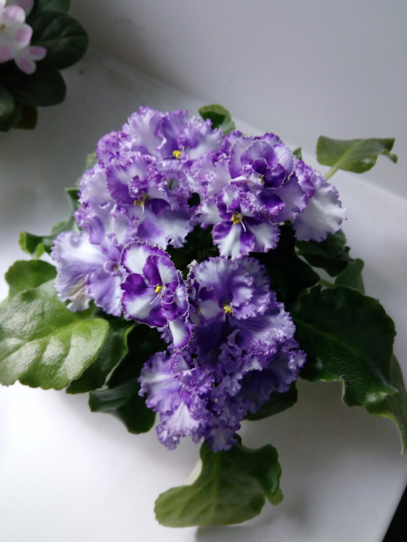 Моё цветочное богатство - Страница 37 Img_2086