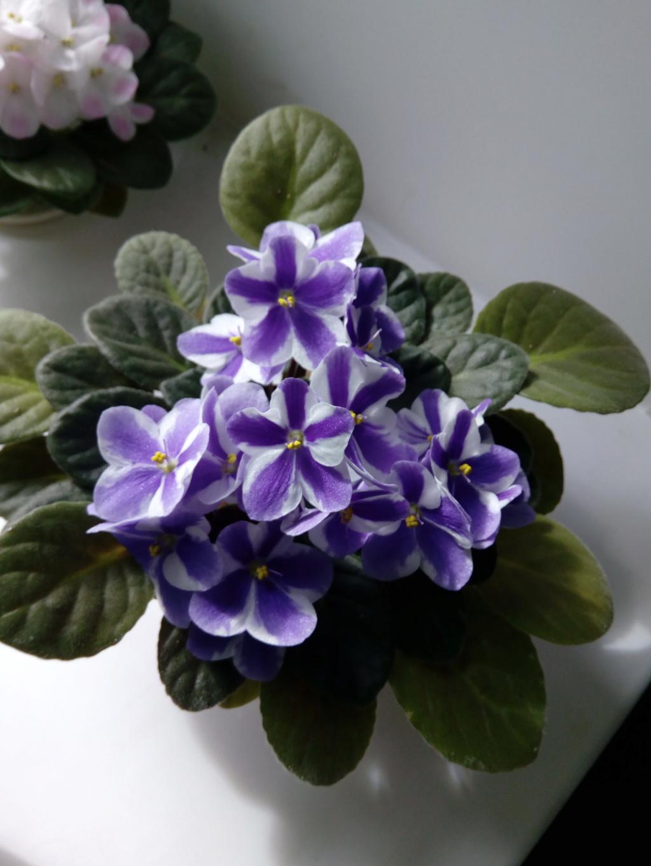 Моё цветочное богатство - Страница 37 Img_2087