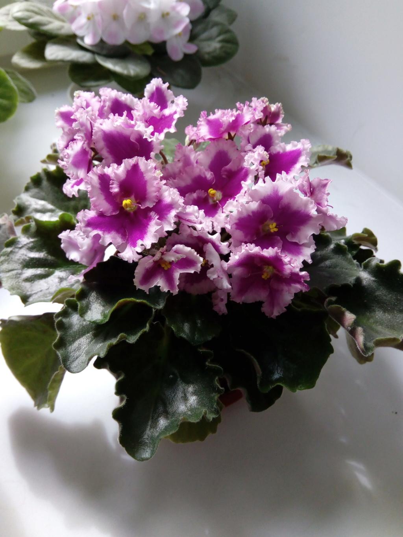 Моё цветочное богатство - Страница 37 Img_2088