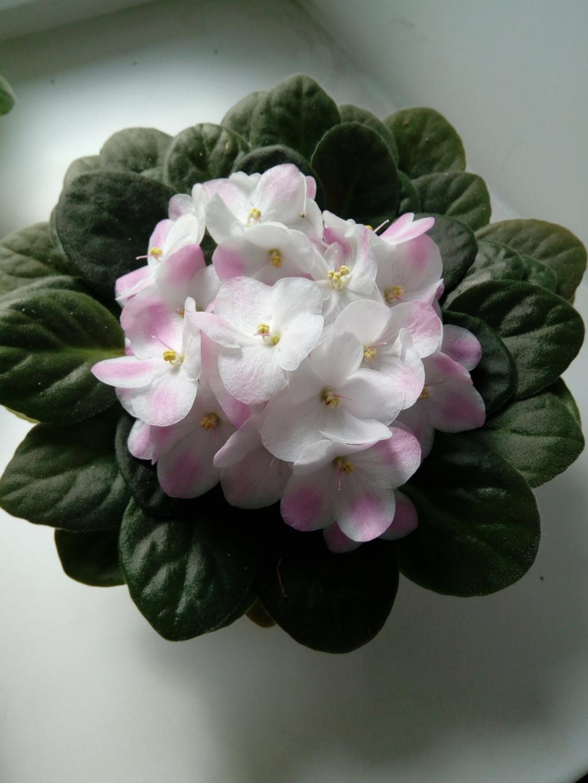 Моё цветочное богатство - Страница 37 Img_2089