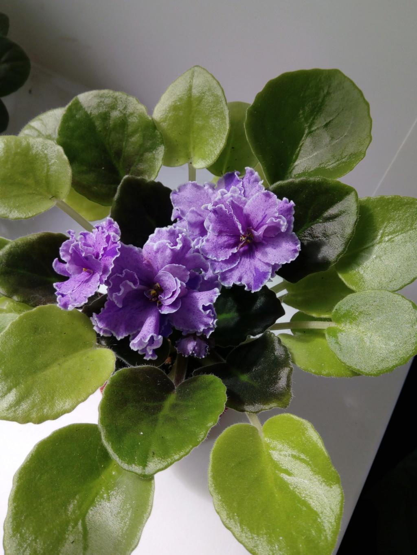 Моё цветочное богатство - Страница 37 Img_2091