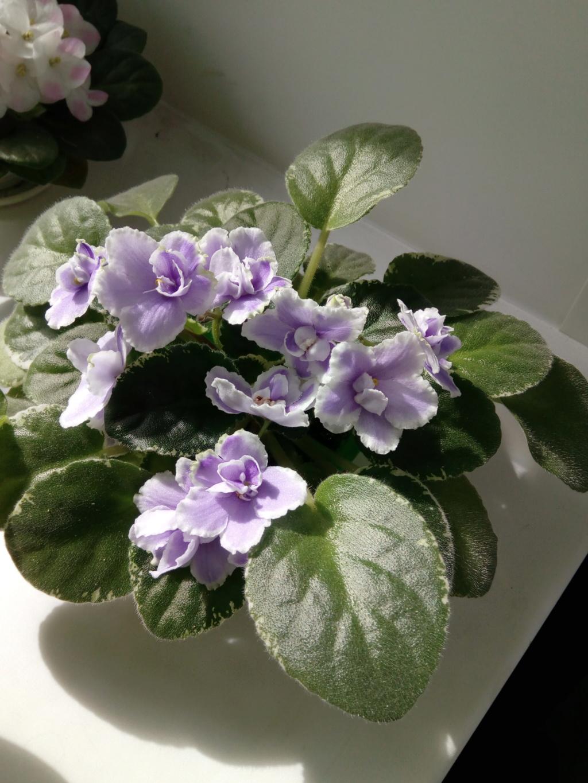 Моё цветочное богатство - Страница 37 Img_2093