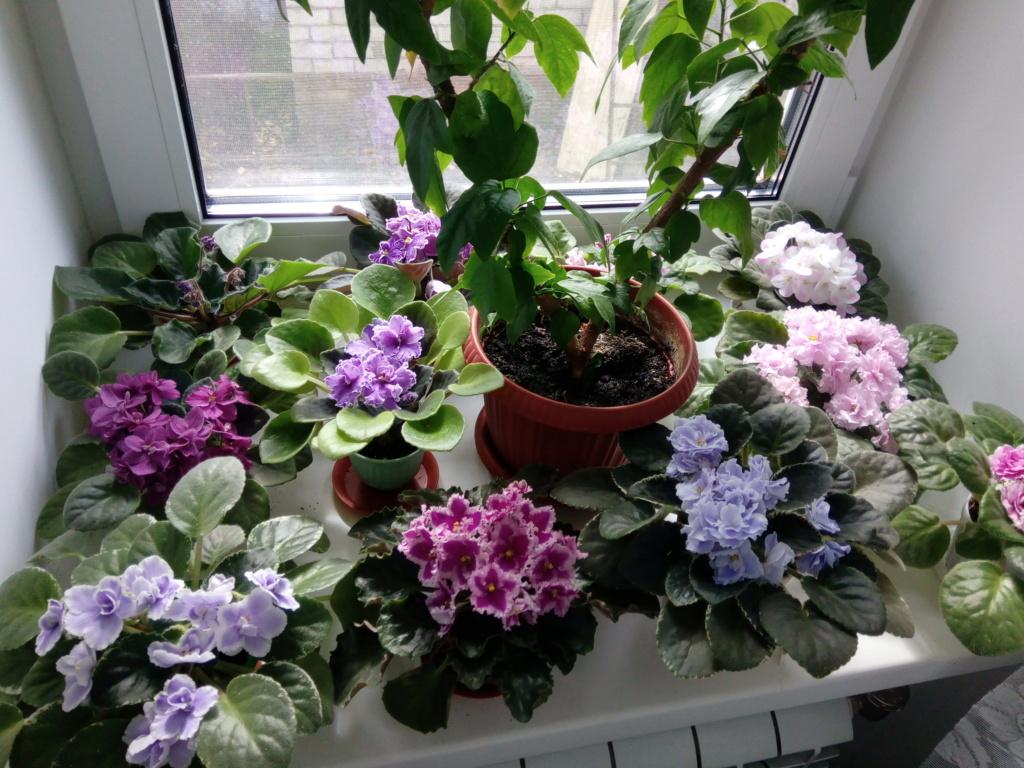 Моё цветочное богатство - Страница 37 Img_2096