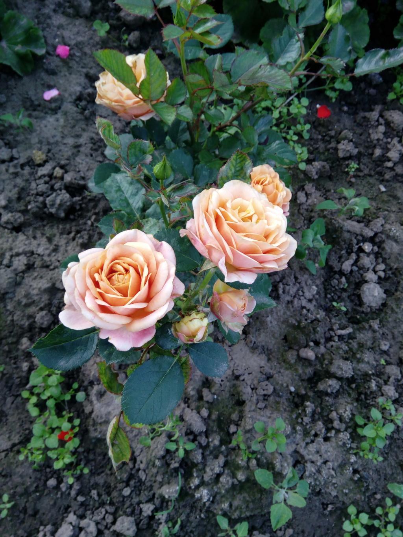 Моё цветочное богатство - Страница 37 Img_2099