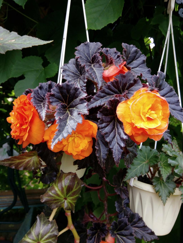 Моё цветочное богатство - Страница 38 Img_2101