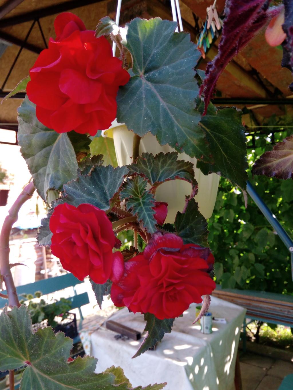 Моё цветочное богатство - Страница 38 Img_2102