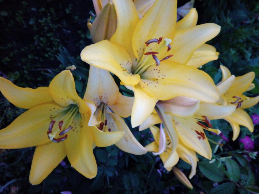 Моё цветочное богатство - Страница 38 Img_2103
