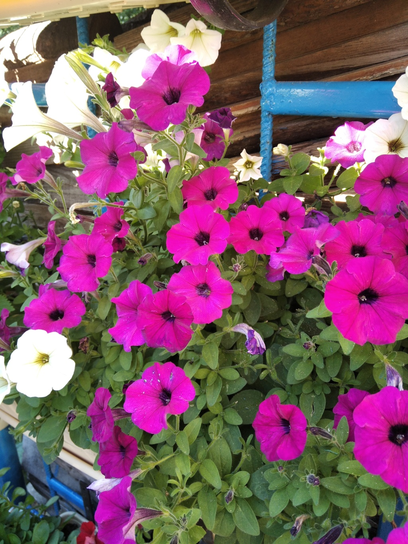 Моё цветочное богатство - Страница 38 Img_2110