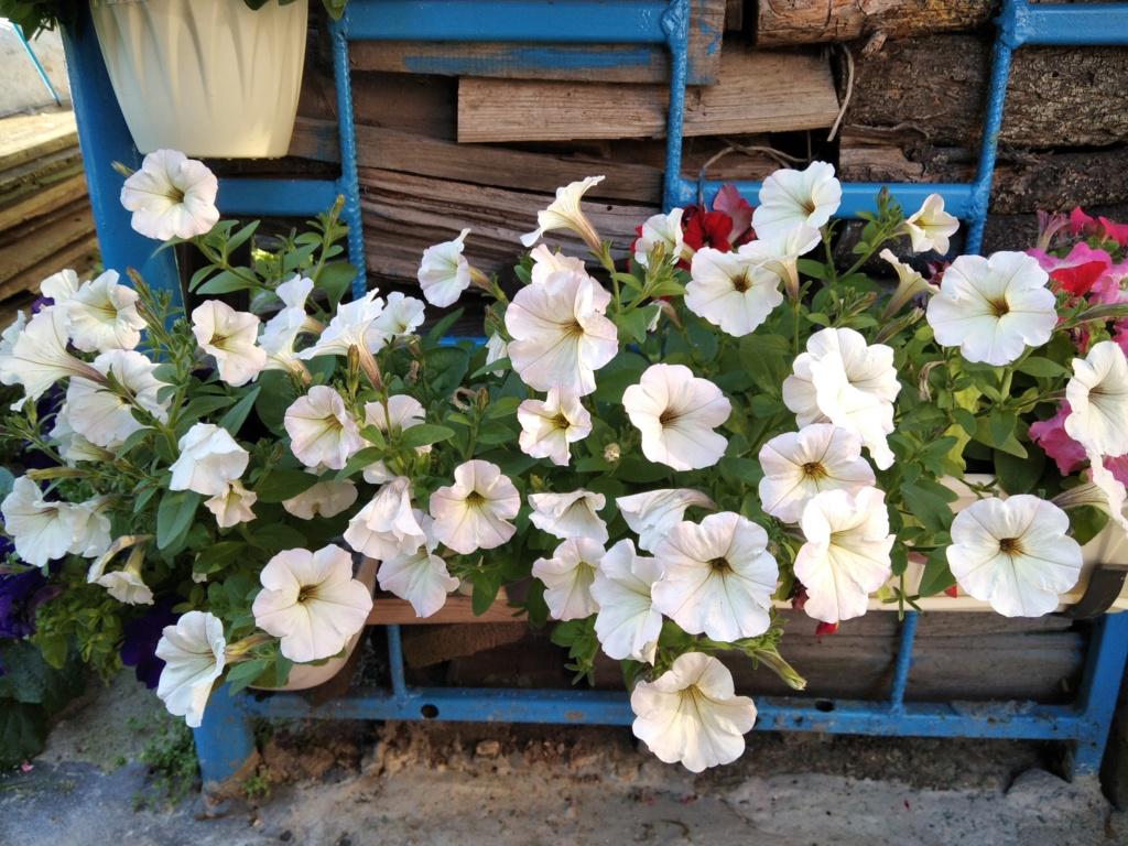 Моё цветочное богатство - Страница 38 Img_2112