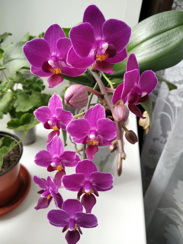 Моё цветочное богатство - Страница 38 Img_2115