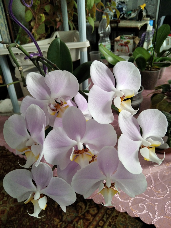 Моё цветочное богатство - Страница 38 Img_2116