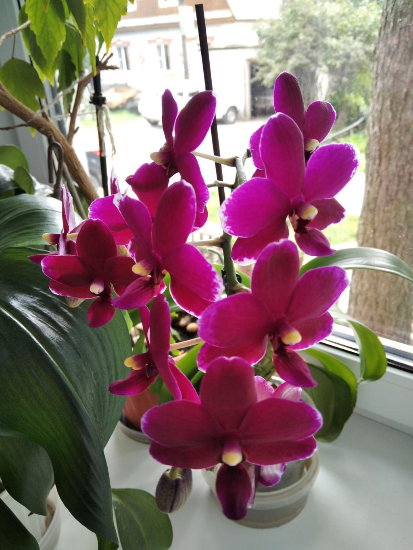 Моё цветочное богатство - Страница 38 Img_2118
