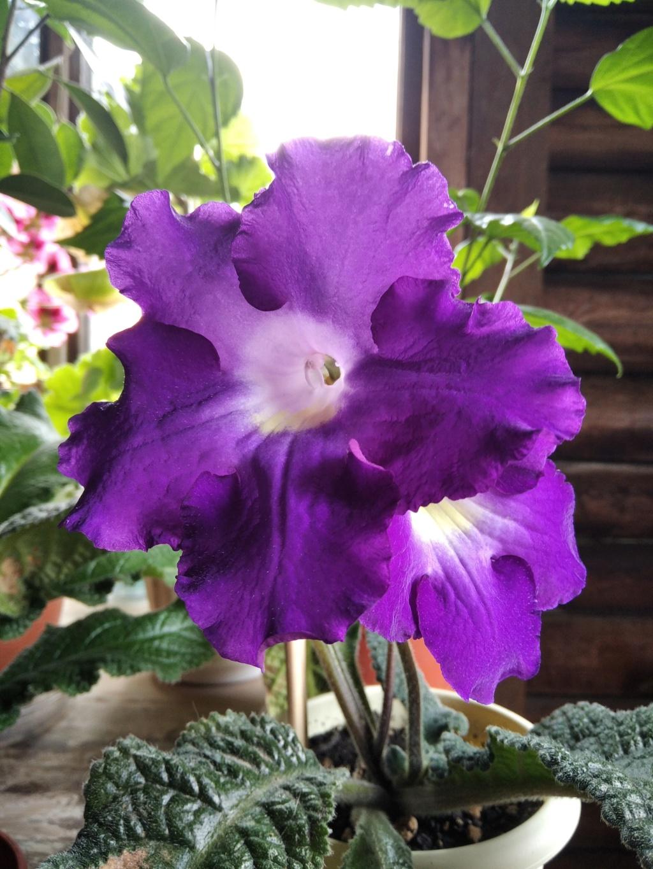 Моё цветочное богатство - Страница 38 Img_2119