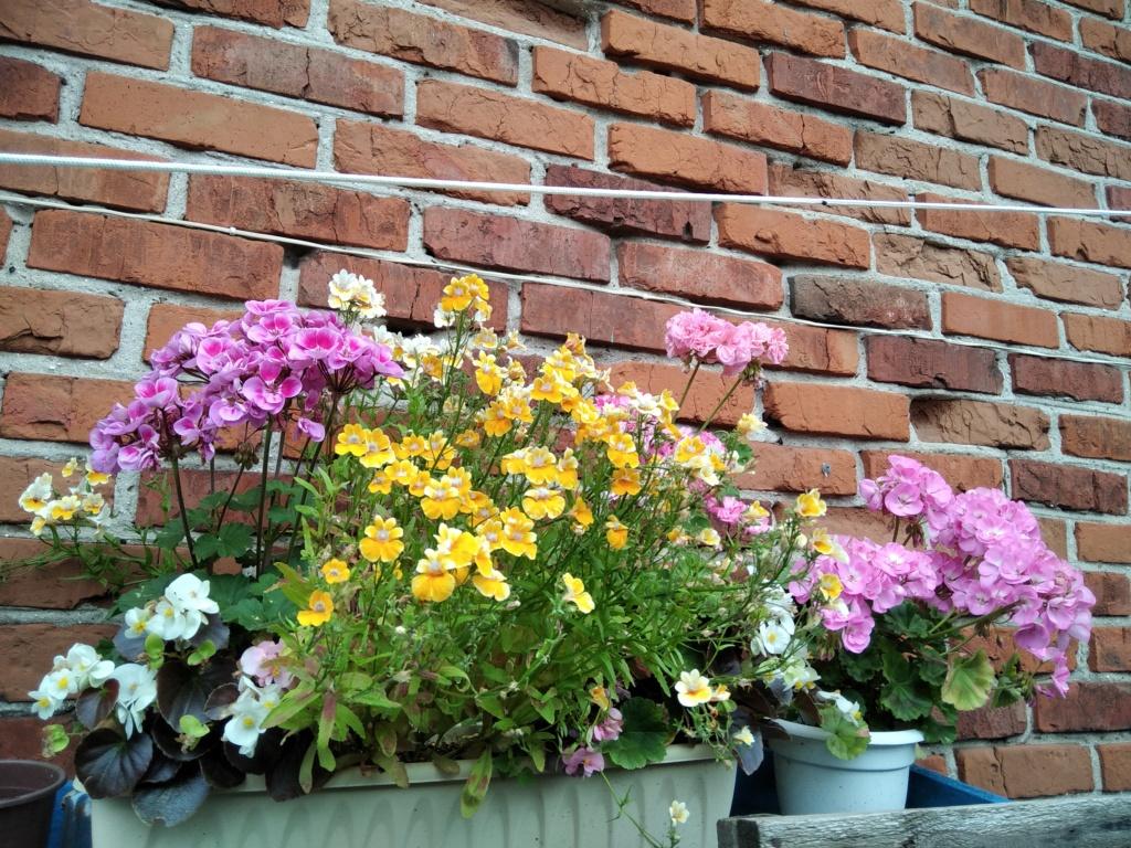 Моё цветочное богатство - Страница 38 Img_2129