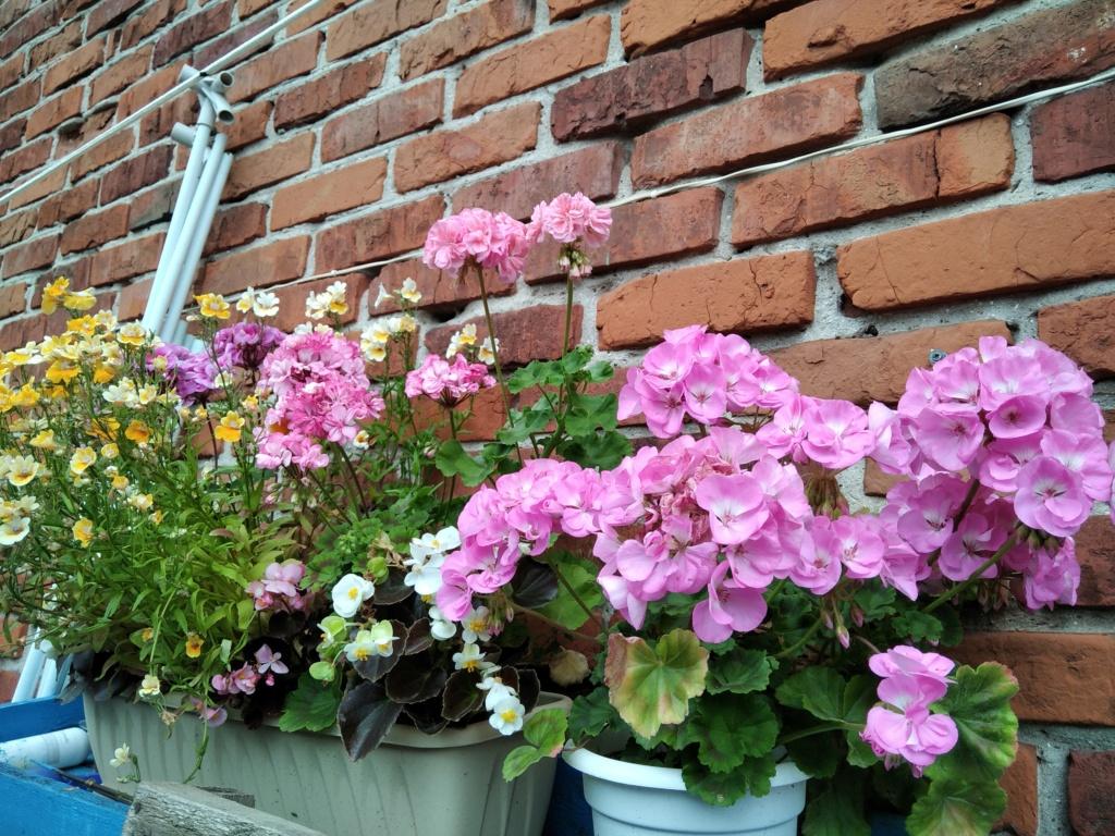 Моё цветочное богатство - Страница 38 Img_2130