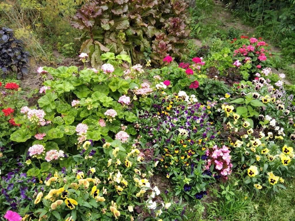 Моё цветочное богатство - Страница 38 Img_2131