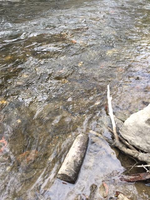 tête d'obus apparue dans un cour d'eau proche de mon domicile Img_7513