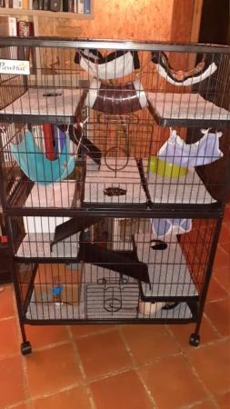 Fred, George et Lee-J (sparrow, buddy et reeze) 20210113
