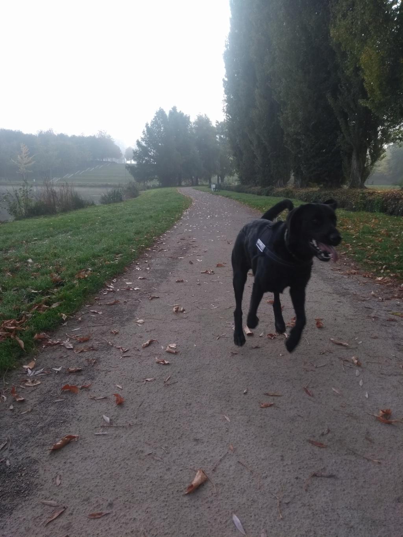 Owen, mâle croisé labrador noir Img_2011