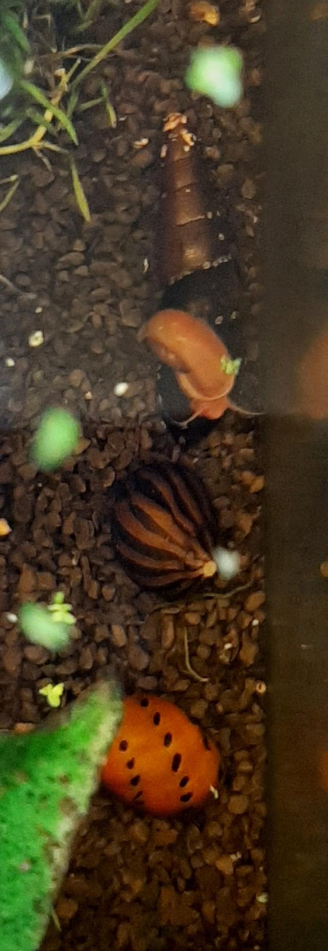 Vos escargots 20200458