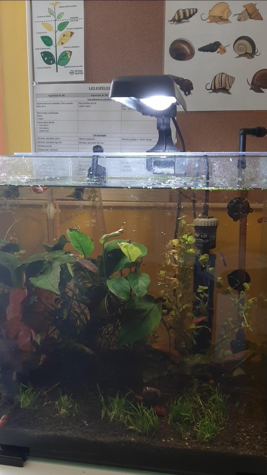 Les aquariums du confinement 20200469