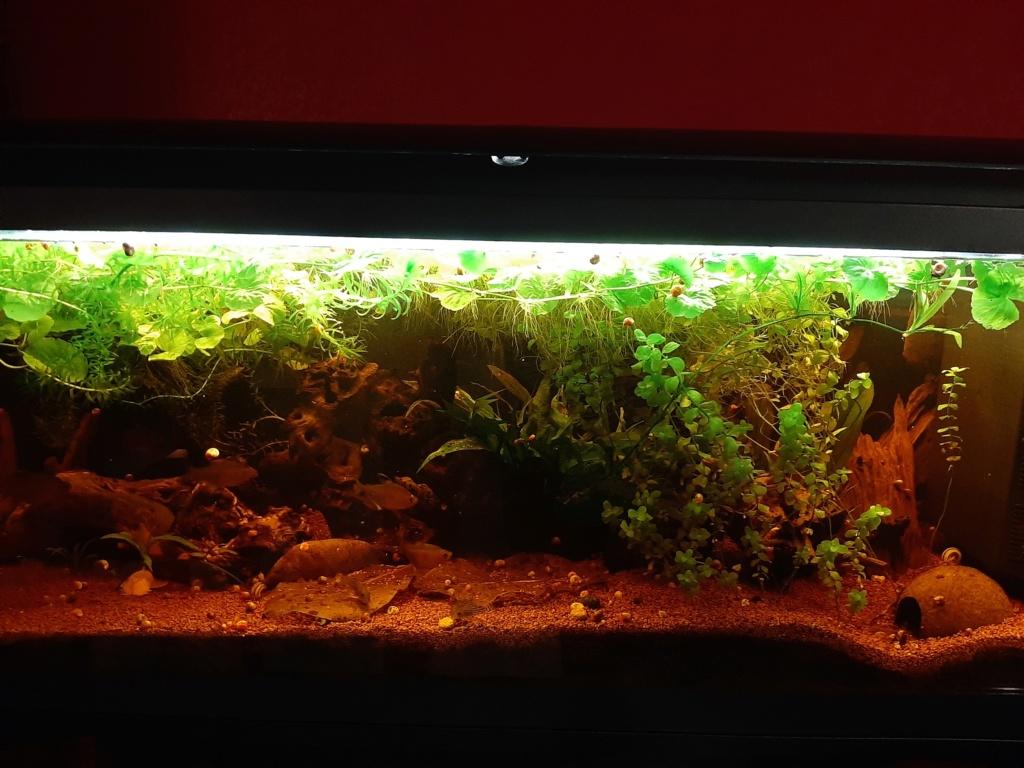 Les aquariums du confinement 20200470