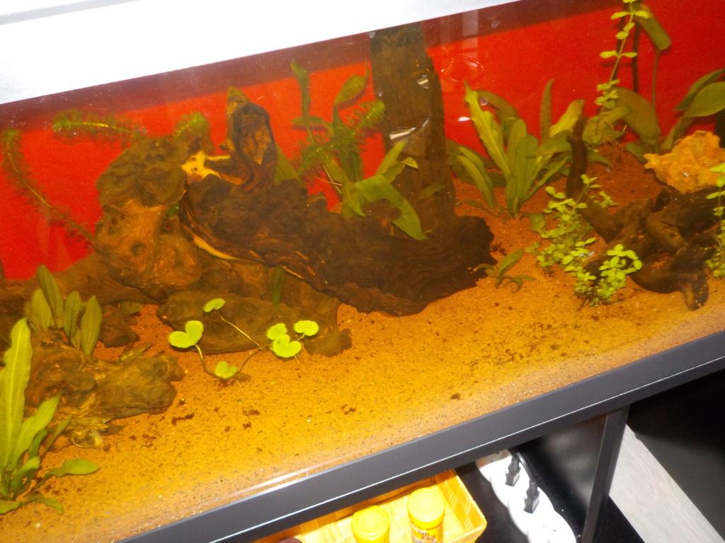 Aquarium 130L Dscn1510