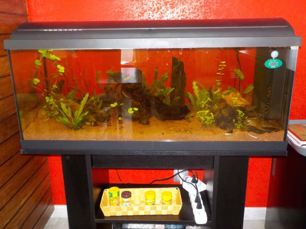 Aquarium 130L Dscn1511