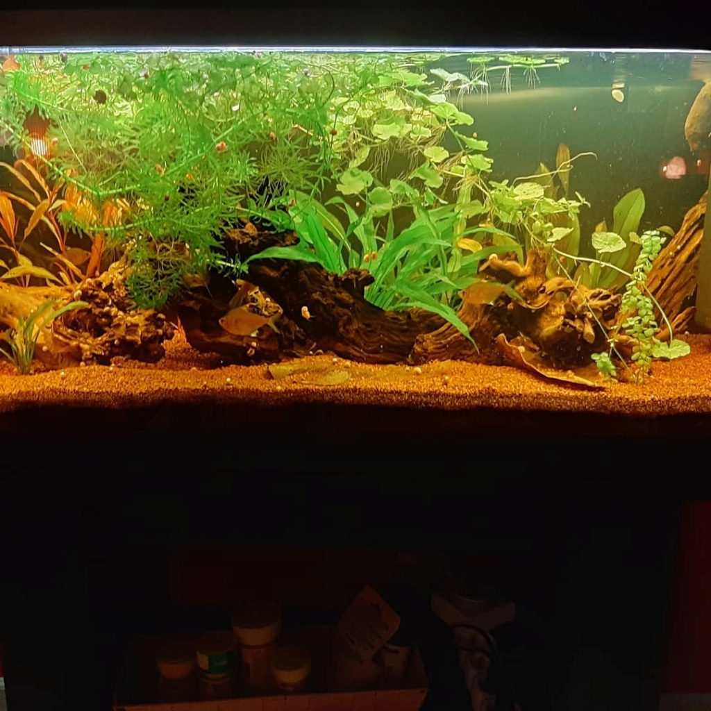 160L Biotope amazonien Img_2014