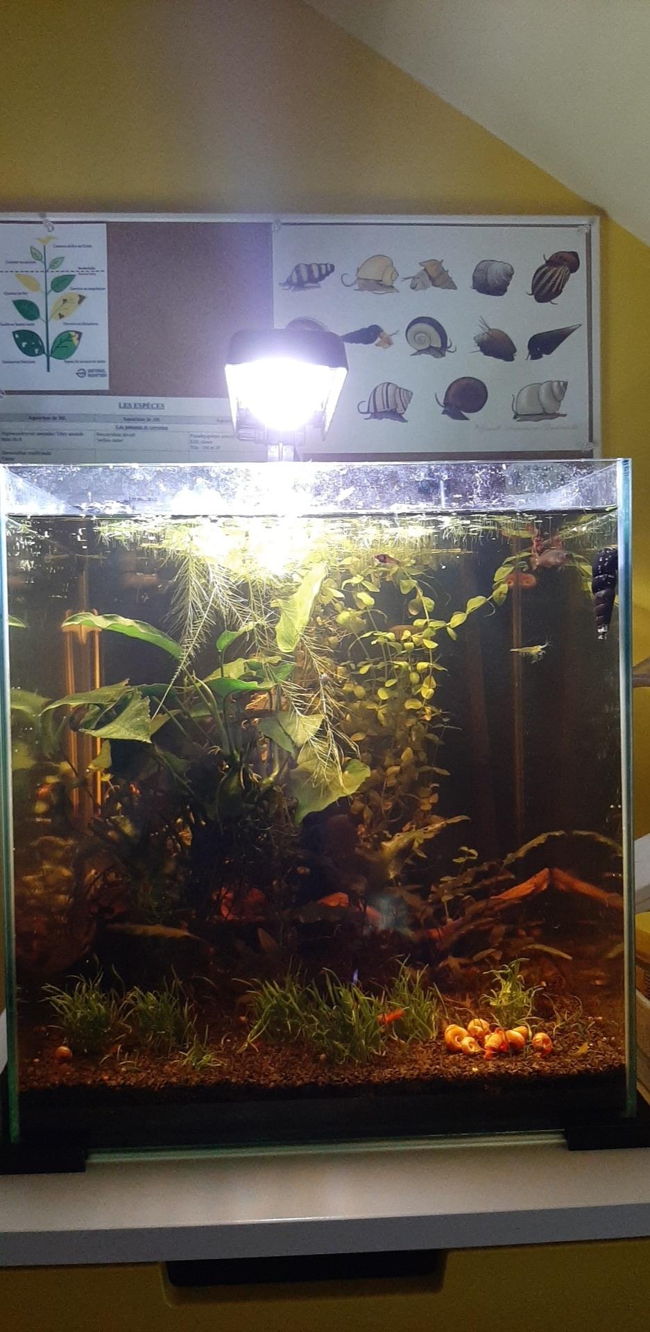 Les aquariums du confinement Snapch46
