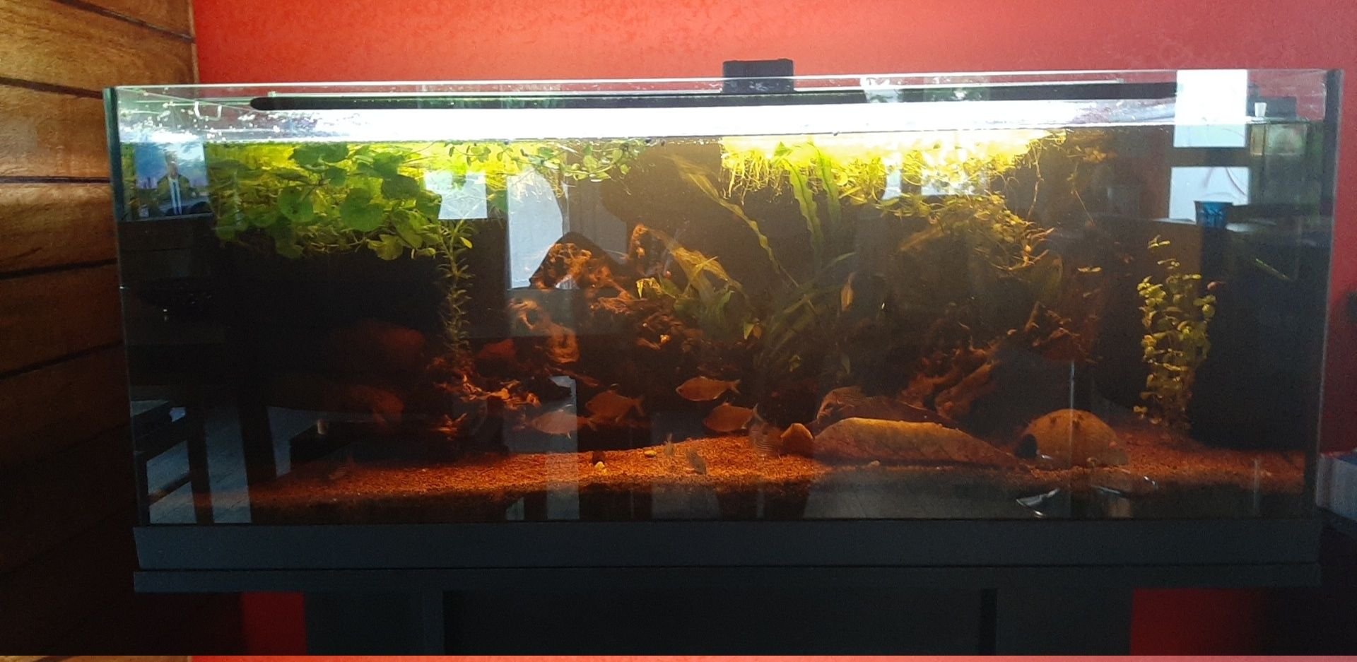 Les aquariums du confinement Snapch50