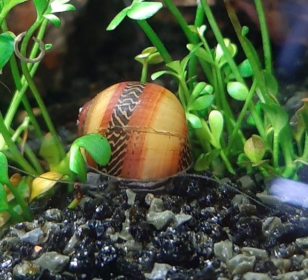 Vos escargots Vittin10