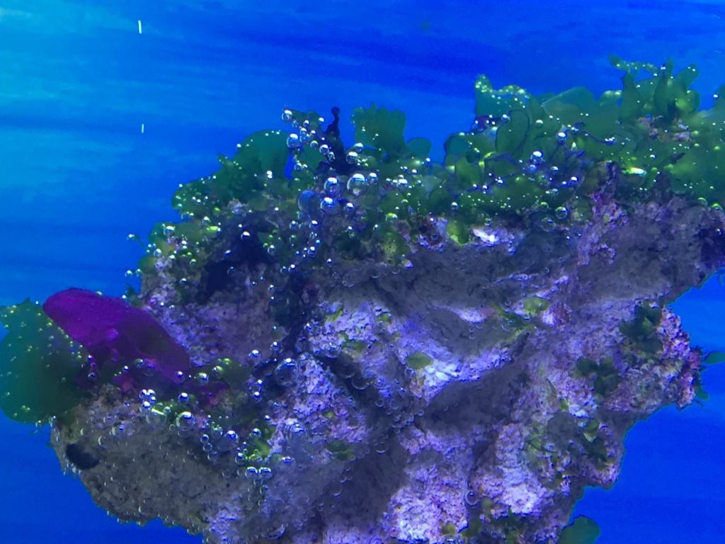 quelles sont les bonnes ou les mauvaises algues ?? B10