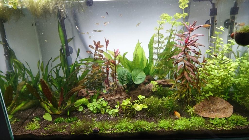 [résolu]Algues filamenteuses :( Aqua0210