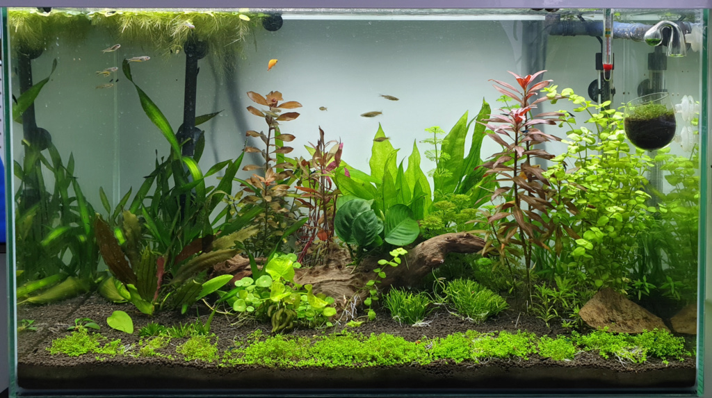 [résolu]Algues filamenteuses :( Aqua0310