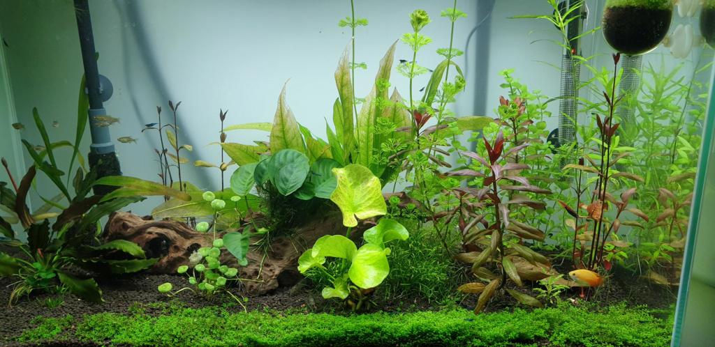 [résolu]Algues filamenteuses :( - Page 2 Aquari10