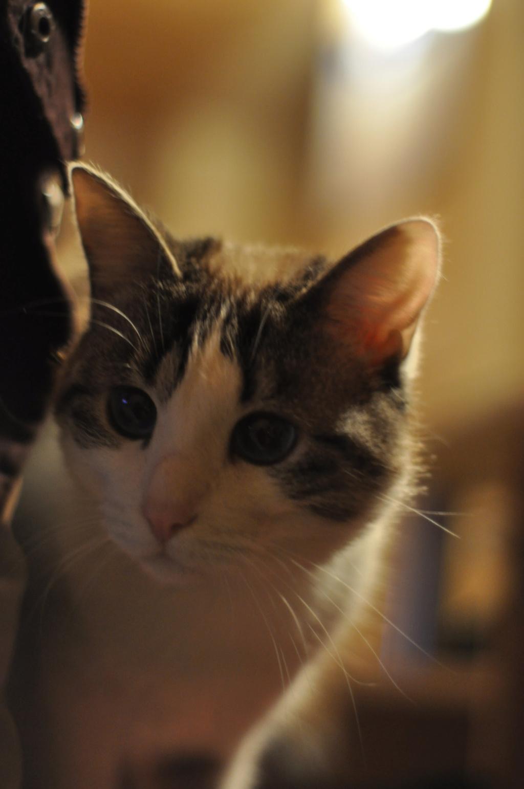 Perdu chat à Cunlhat Dsc_0510
