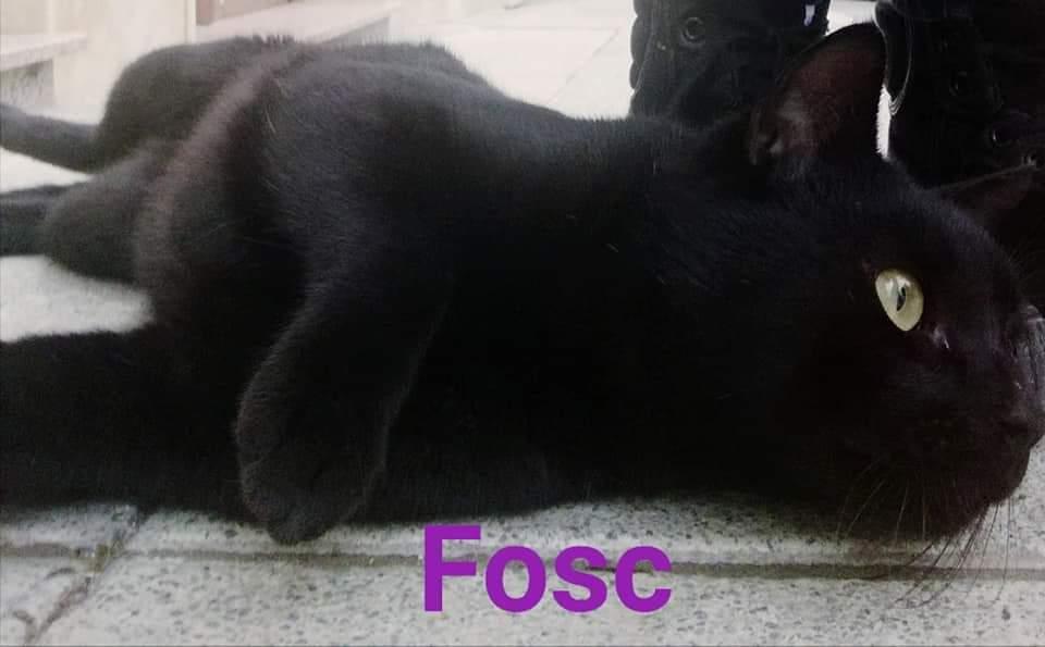 FOSC - NOIR -  ES (MS) Fb_im604