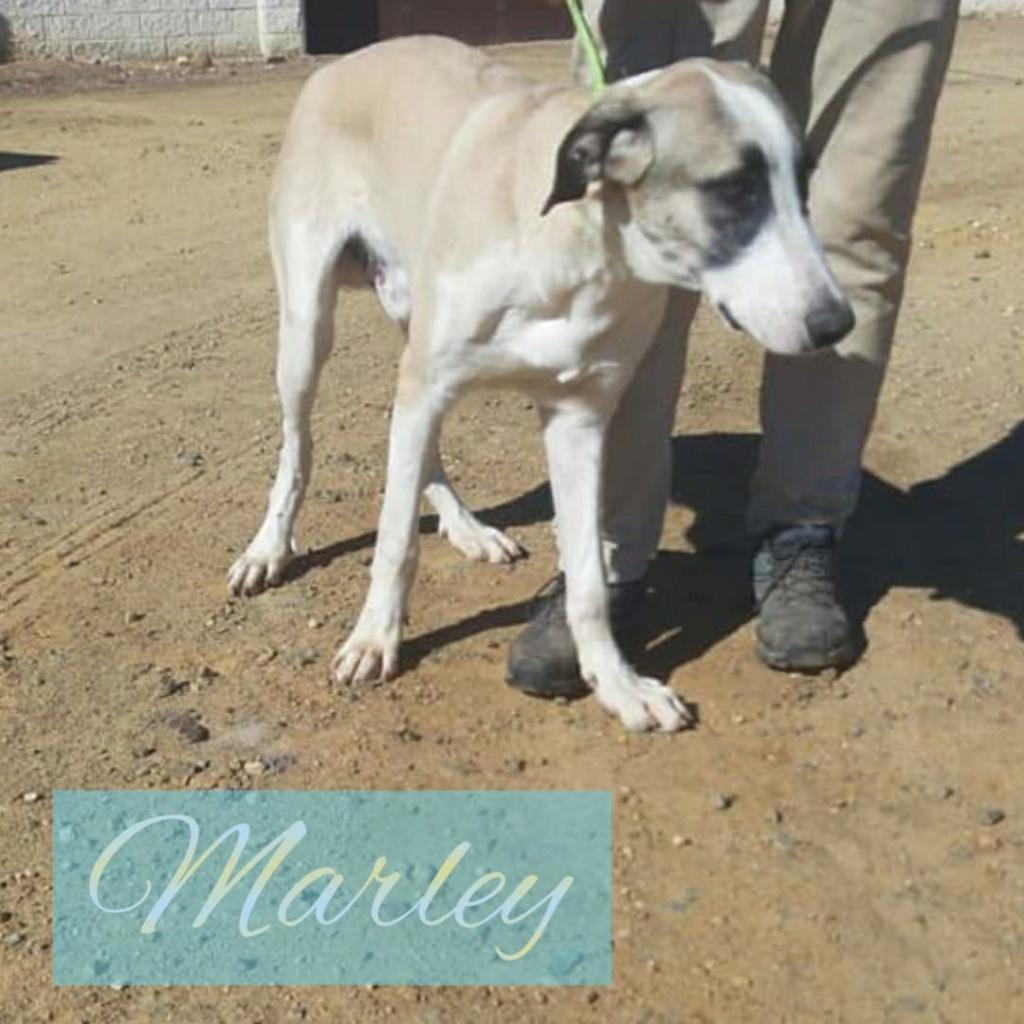 MARLEY - Parrainé par Mathilde (MN) Img-2661
