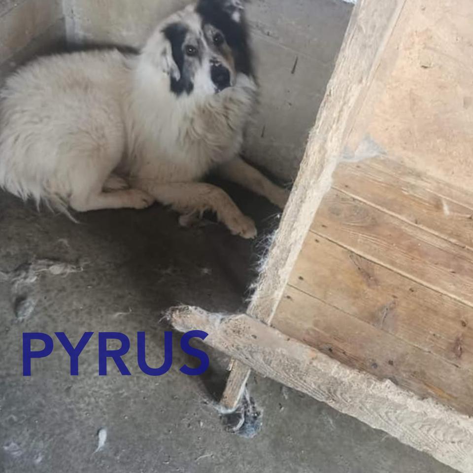 PYRUS - Parrainé par Marielle (LP) ( Terminé) Photoc17
