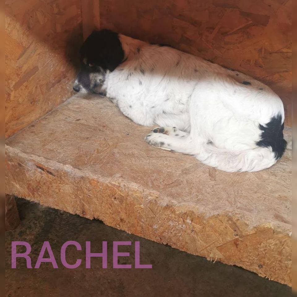 RACHEL - Parrainée par Claire (LP) ( Terminé) Photoc22