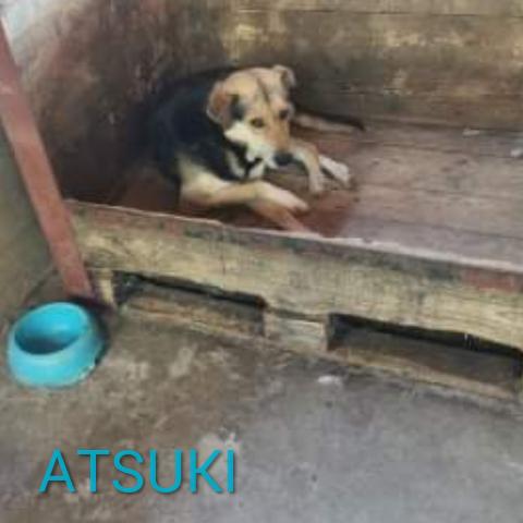 ATSUKI - Parrainé par Sonia ( LP) ( Terminé) Photoc24