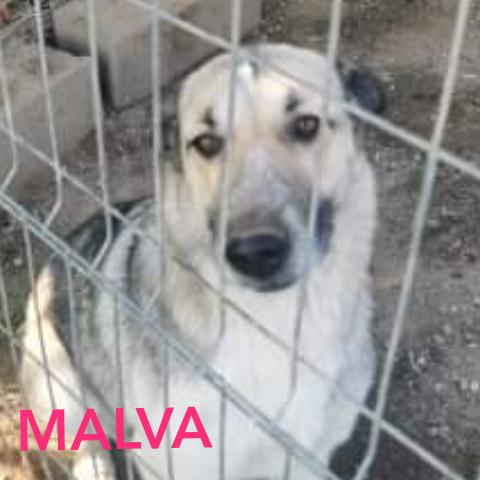 MALVA - Parrainée par Claudia (LP) (Terminé) Photoc30
